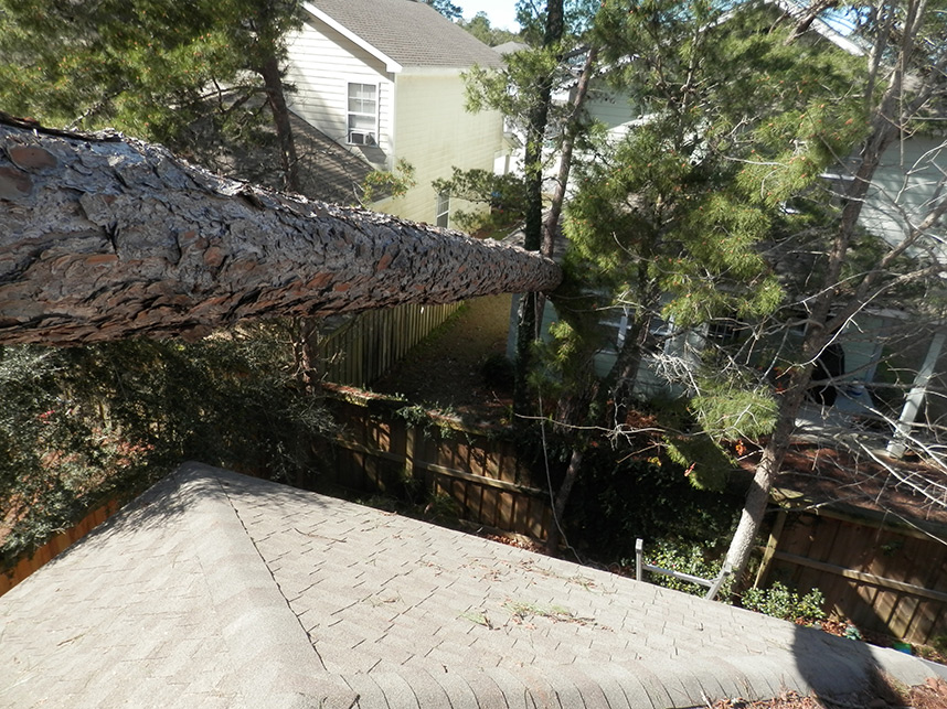 Pine Tree Damages Roofing Todd Claim Service